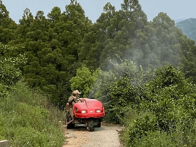 熊本・伊藤ミカン園での金峰みかん栽培に必要な肥料散布