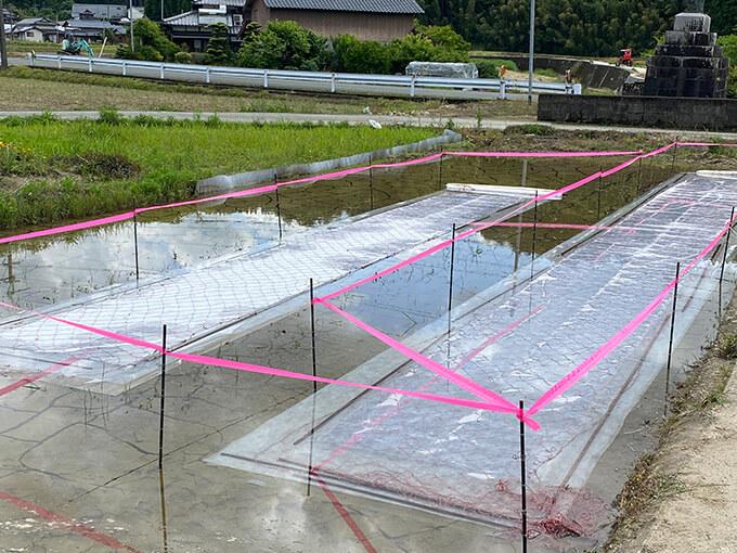熊本県和水町の伊藤ミカン園が金峰みかんに主軸をおきながら田植えの準備をする光景
